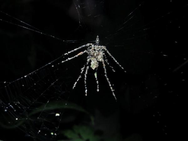 蜘蛛/2012/12/29 12:40 | 作者:bolvar | 关键字:科学,wired,琥珀化石,...